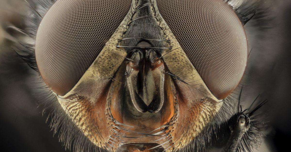 Супрун розповіла, які загрози для здоров'я можуть нести мухи / фото pixabay.com