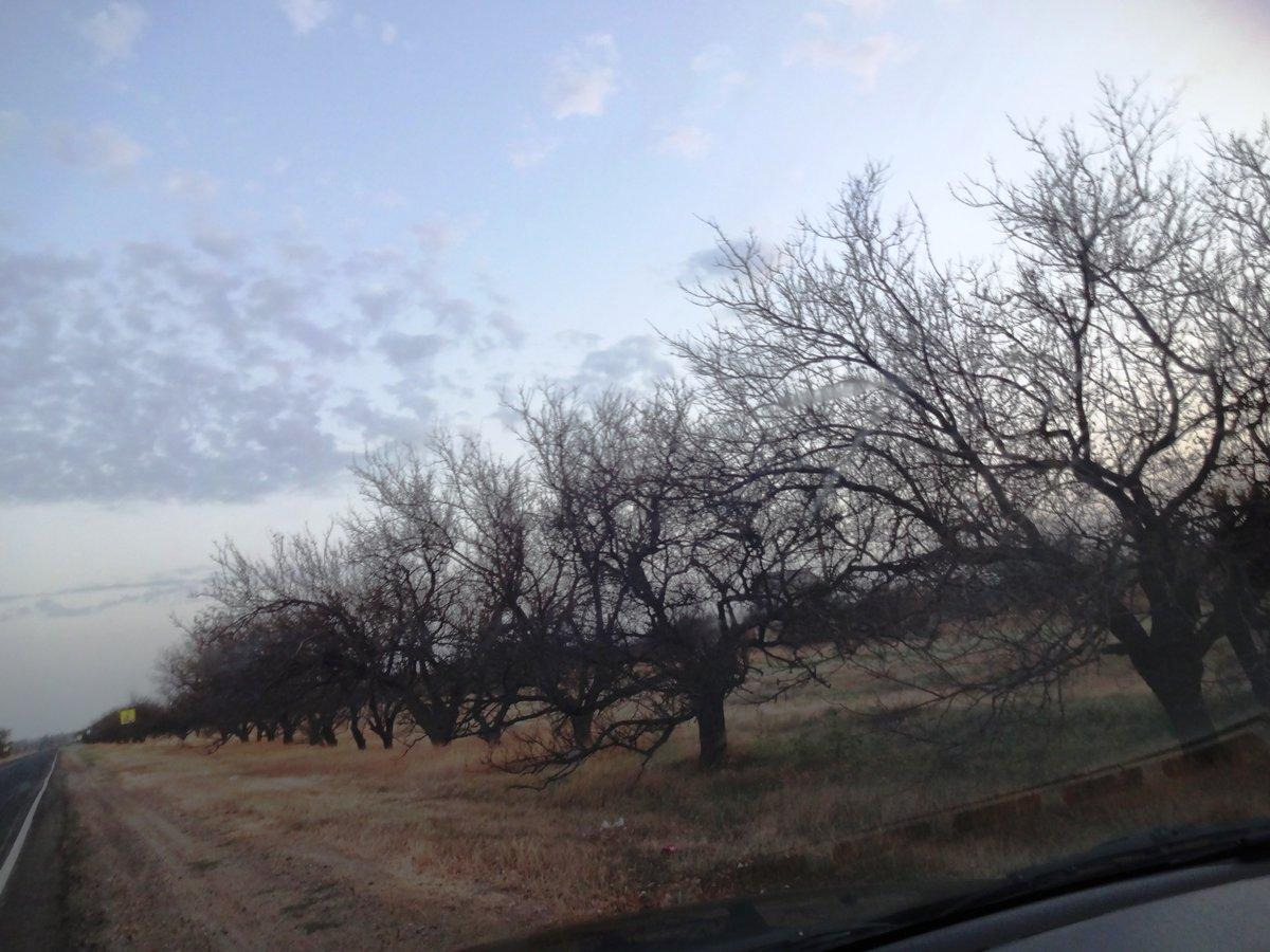 Деревья и другая растительность вымерли / фото Twitter - RoksolanaToday&Крым