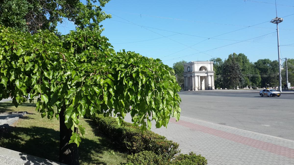 Триумфальная арка в Кишиневе / Фото Марина Григоренко