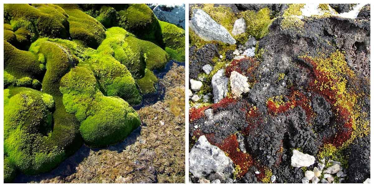 Одним із свідчень стала зміна видового складу мохів / фото uow.edu.au