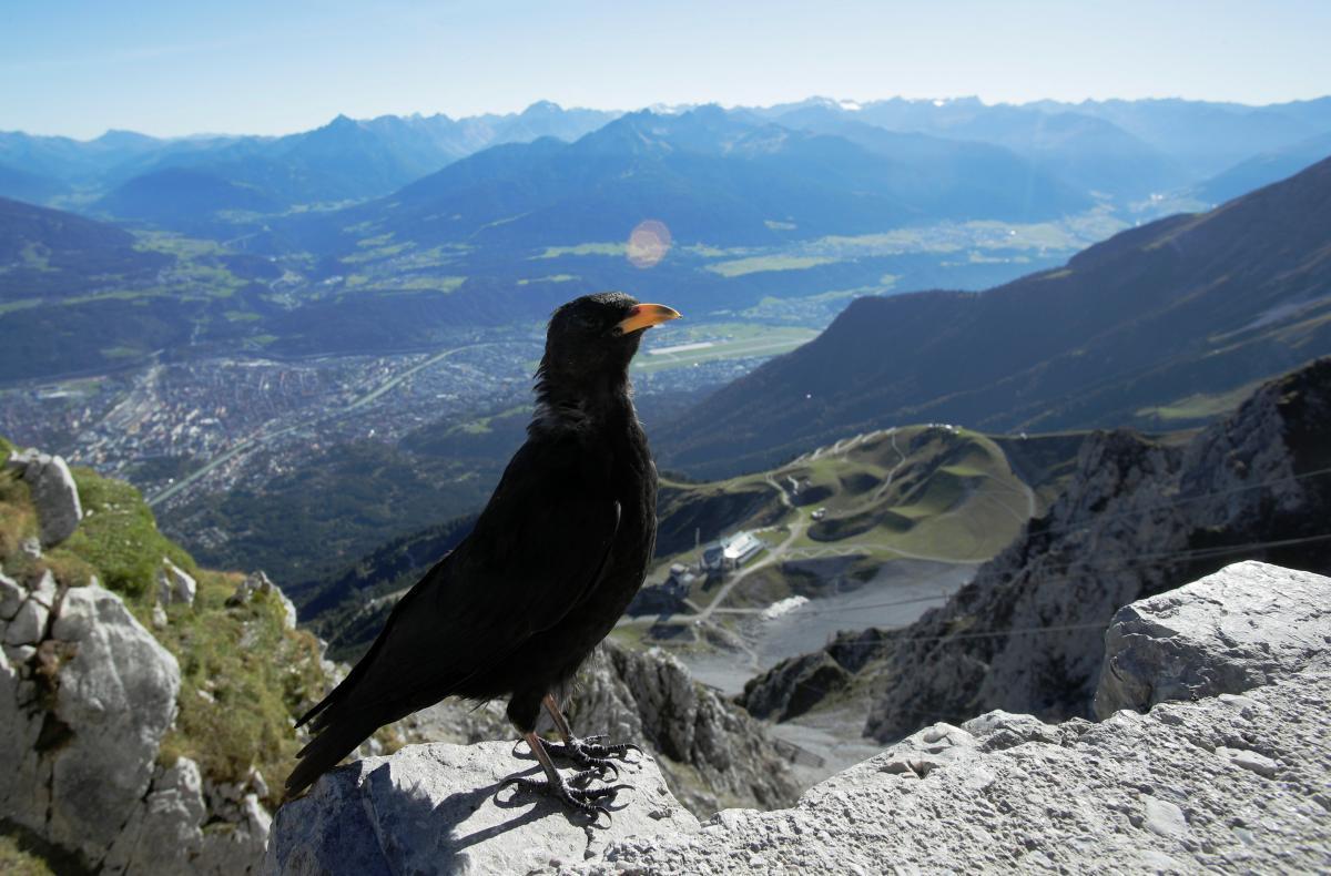 """Прошлый год для швейцарских Альп выдался """"горячим"""" / фото REUTERS"""