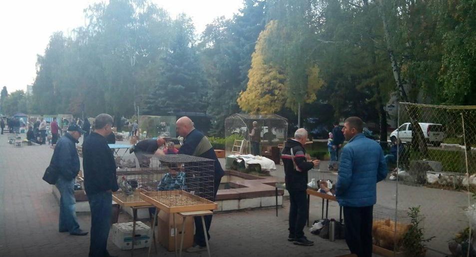 В Кременчуге проходит фестиваль голубей / фото Геннадия Тертычного и пресс-службы городского совета Кременчуга