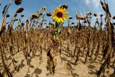 Погода на выходные: в ближайшие дни в Украине немного потеплеет, без осадков