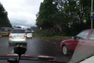 Негода на Львівщині: розтрощені зупинки, повалені дерева та відключення електроенергії (фото, відео)