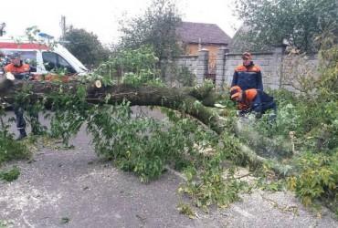 В Україні вирує негода: більше 200 населених пунктів залишилися без електроенергії