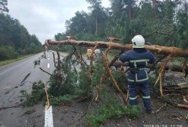 Ураган на западной Украине повалил деревья (фото)