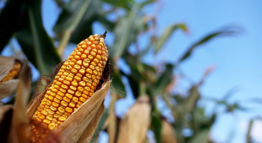 S&P Global Platts: Ukrainian corn price sinks to 9-month low at $168.50/mt on lack of demand