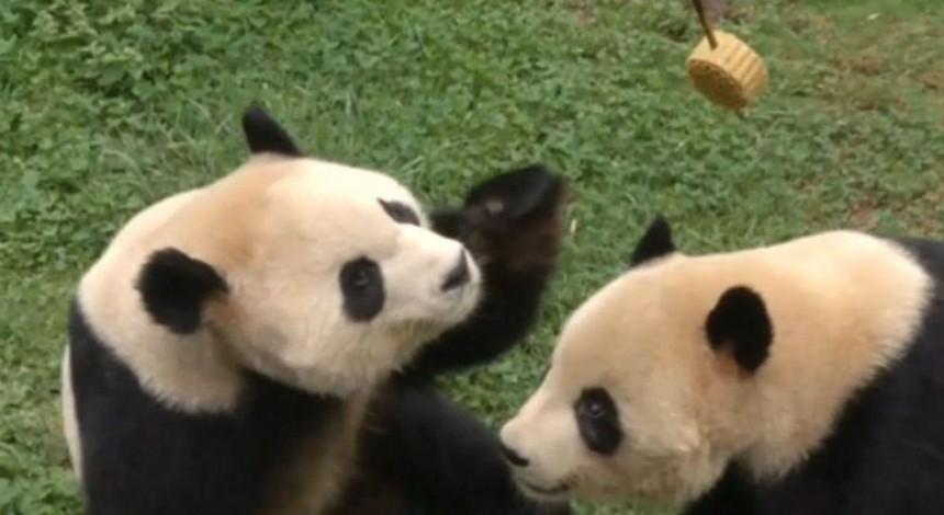 Праздник середины осени: в Китае жителей зоопарка угостили фруктами и традиционными пряниками (видео)