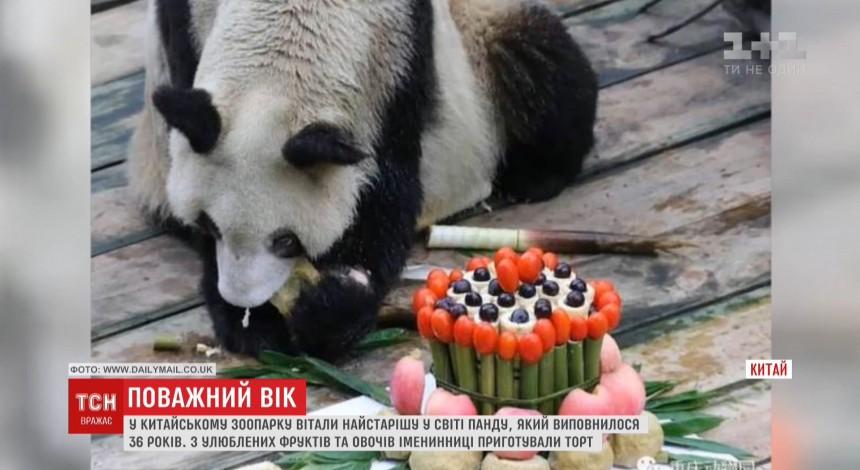 Для найстарішої панди світу на її 36-й день народження приготували спеціальний торт (відео)