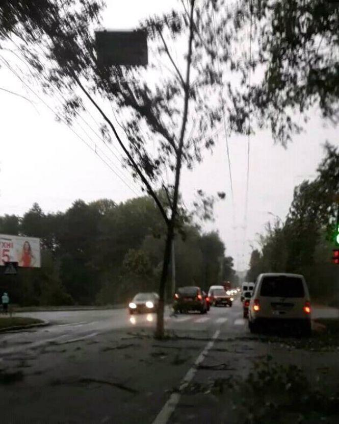 Порывы ветра в Хмельницком срывали ветки с деревьев / vsim.ua