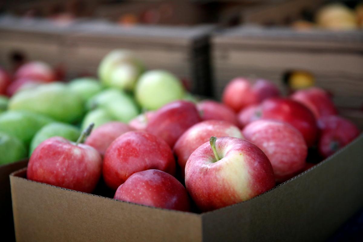 Яблука незабаром подешевшають / Ілюстрація REUTERS