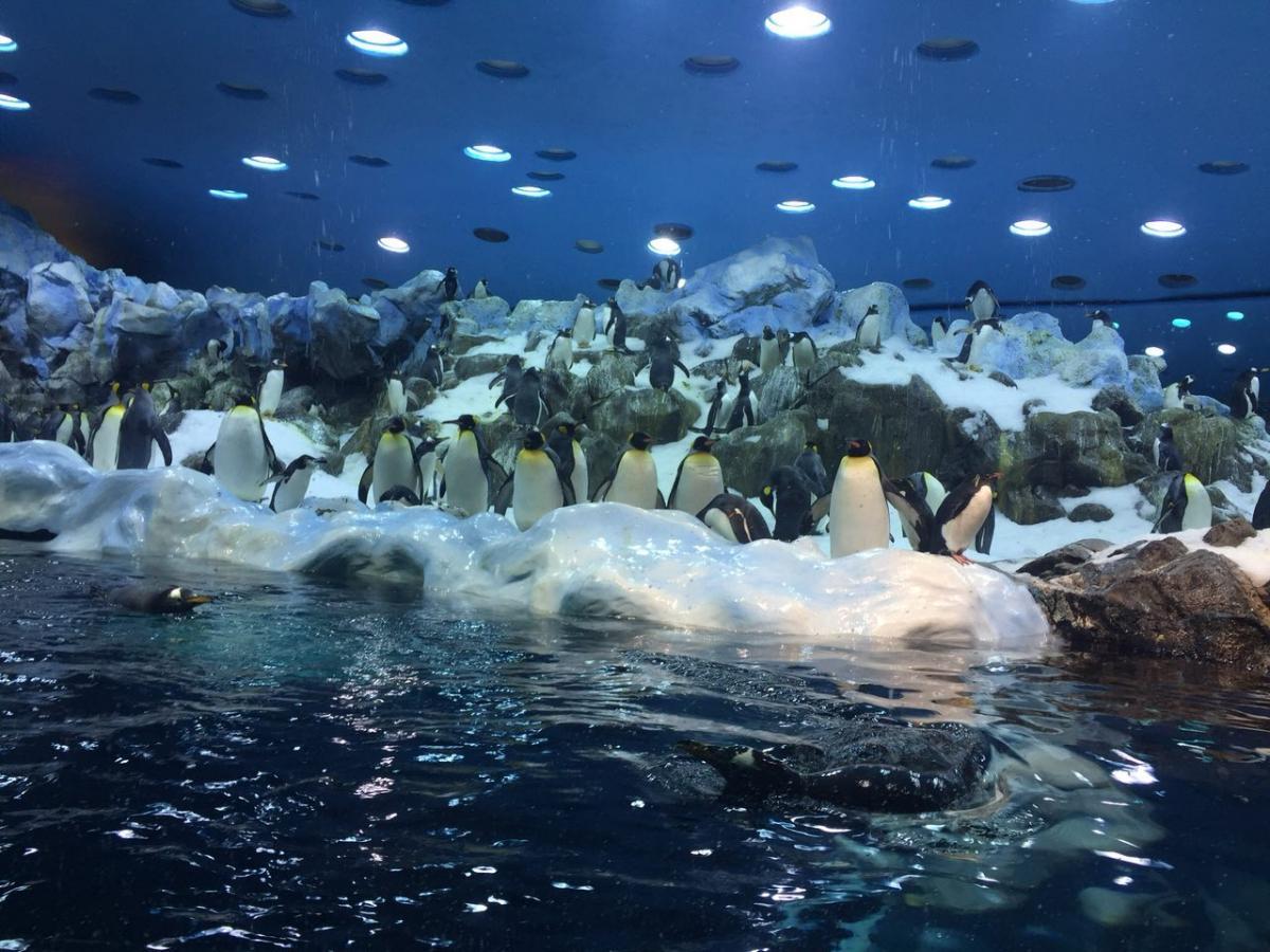 Условия для пингвинов в Лоро Парке максимально приближены к натуральным: снег, ледники и холодная вода / Фото Вероника Кордон