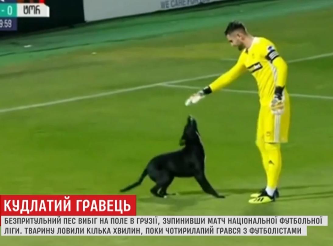 У Грузії собака вибіг на поле, аби погратись з футболістами / Скриншот, ТСН