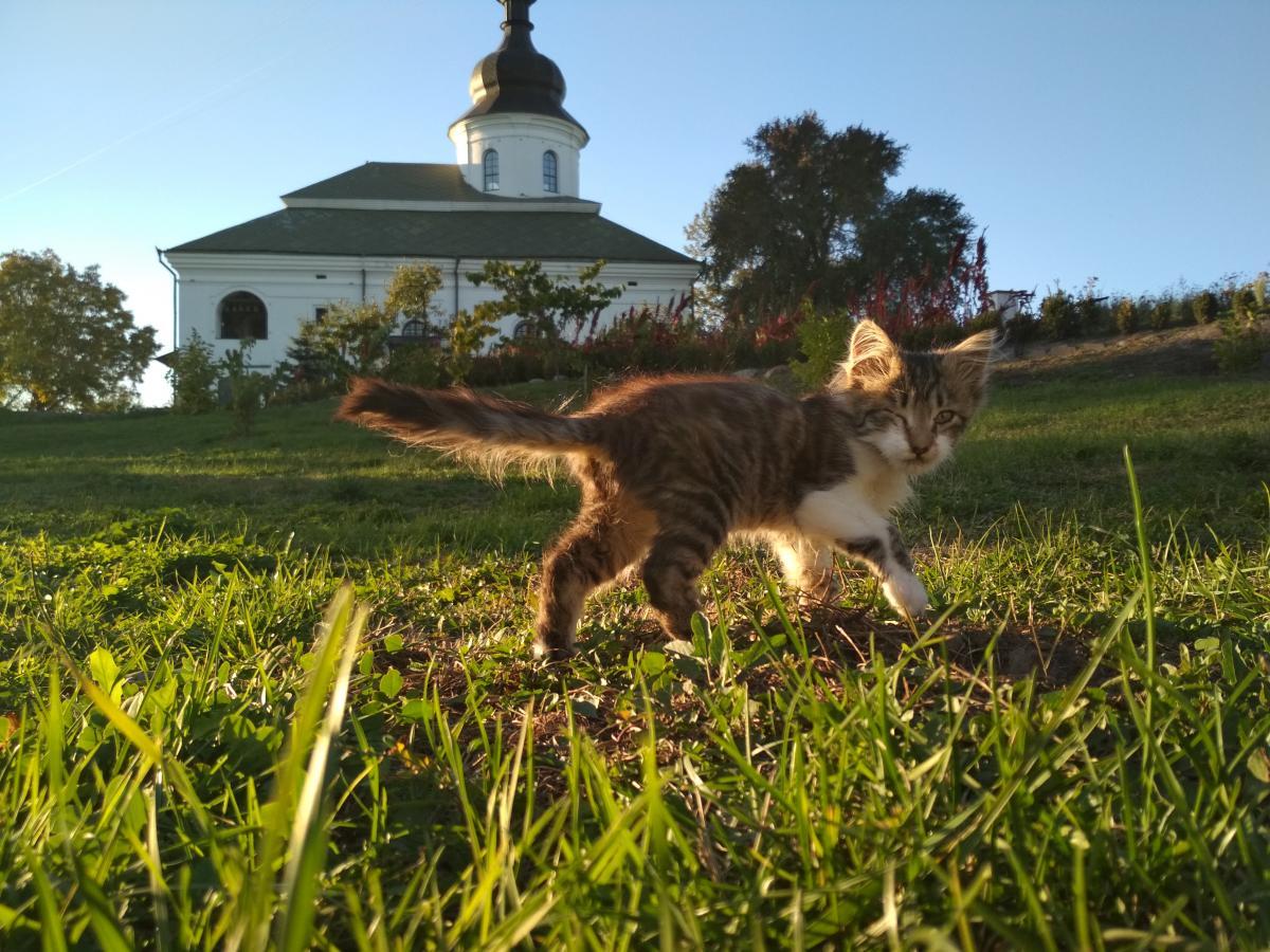 В монастыре под Киевом появилсяприют для бездомных котов / kiev.segodnya.ua / Мила Князьская-Ханова