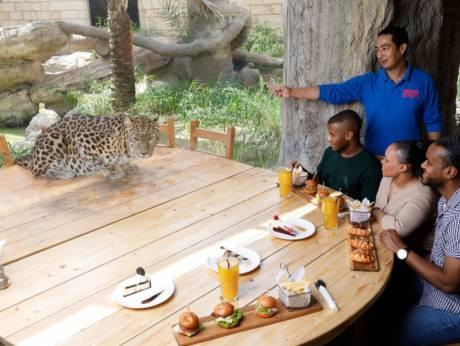 Відвідувачів і тварина розділяє лише скло \ Emirates Park Zoo