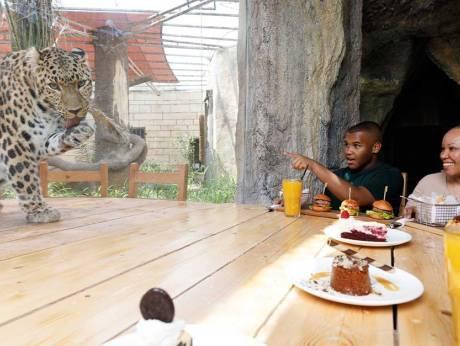 Гостей зоопарку запрошують на обід поруч з печерою леопарда \ Emirates Park Zoo