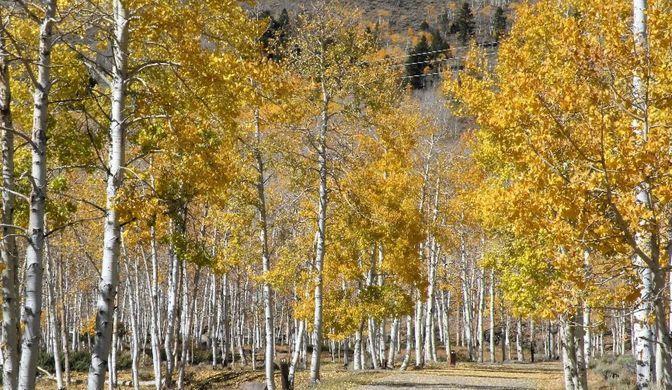 Кількість дерев скоротилася / Paul C. Rogers