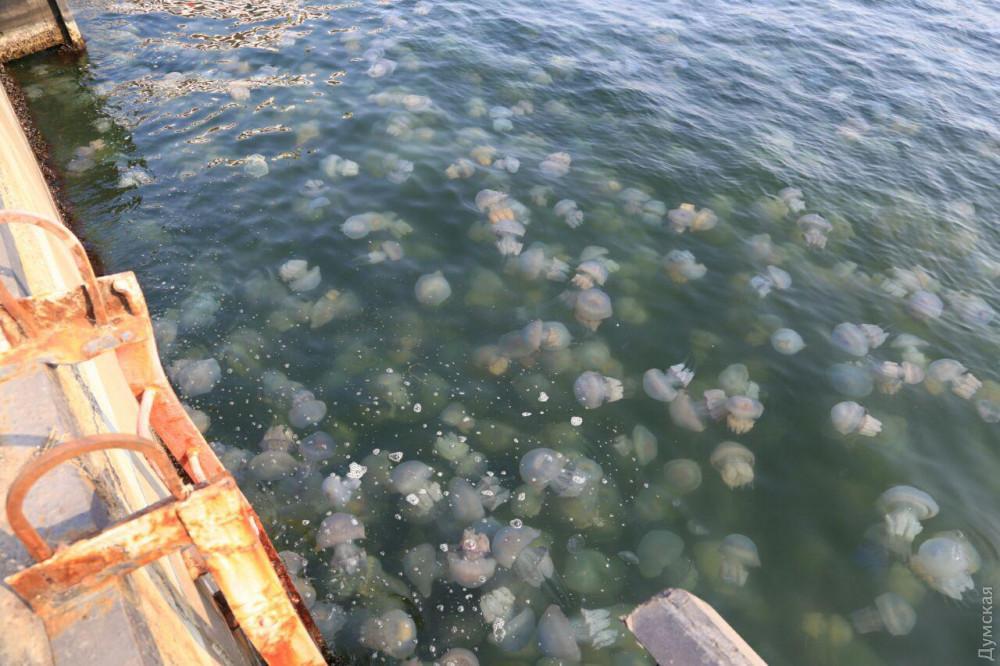 Вакватории Одесского морвокзала —нашествие медуз / фото Думская