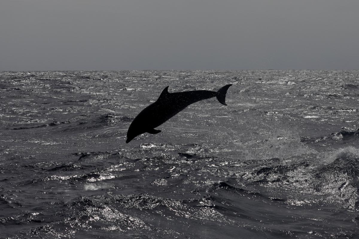 Дельфіни плавають прямо біля берега / ілюстрація REUTERS