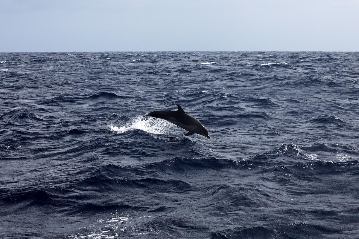Дельфин, иллюстрация / REUTERS