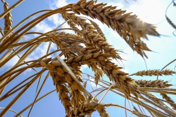 В народе считалось, что если Великий понедельник выдастся солнечным, то урожай будет обильным / Иллюстрация REUTERS