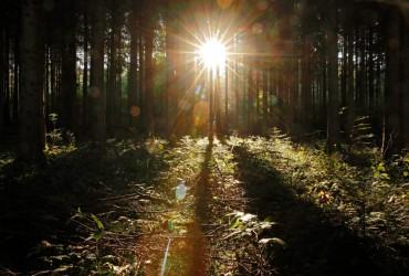 Завтра в Украине сохранится теплая и солнечная погода