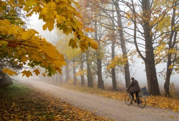 Синоптики рассказали, когда в Украину придут первые заморозки