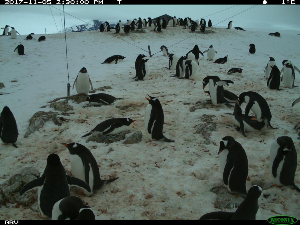 Українські школярі будуть рахувати пінгвінів / фото НАНЦ