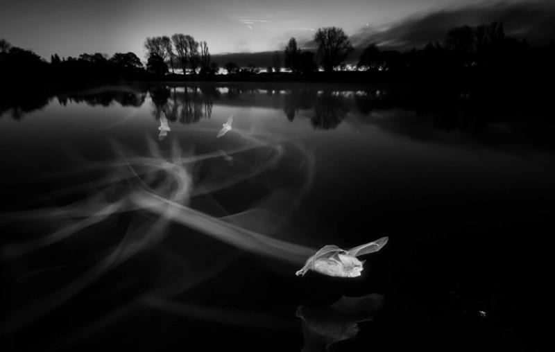 """ПолКоллі """"Сліди на світанку"""" \ фото British Wildlife Photography Awards"""