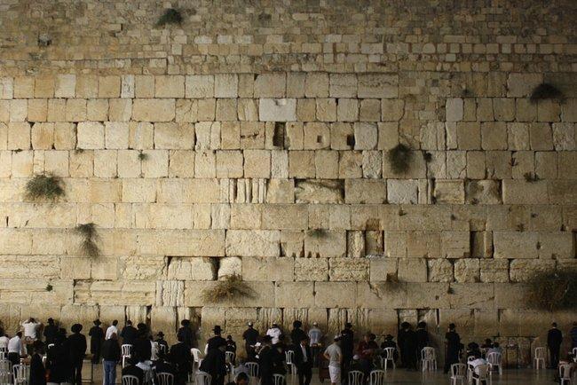 Змея напугала паломников в Иерусалиме / pixabay