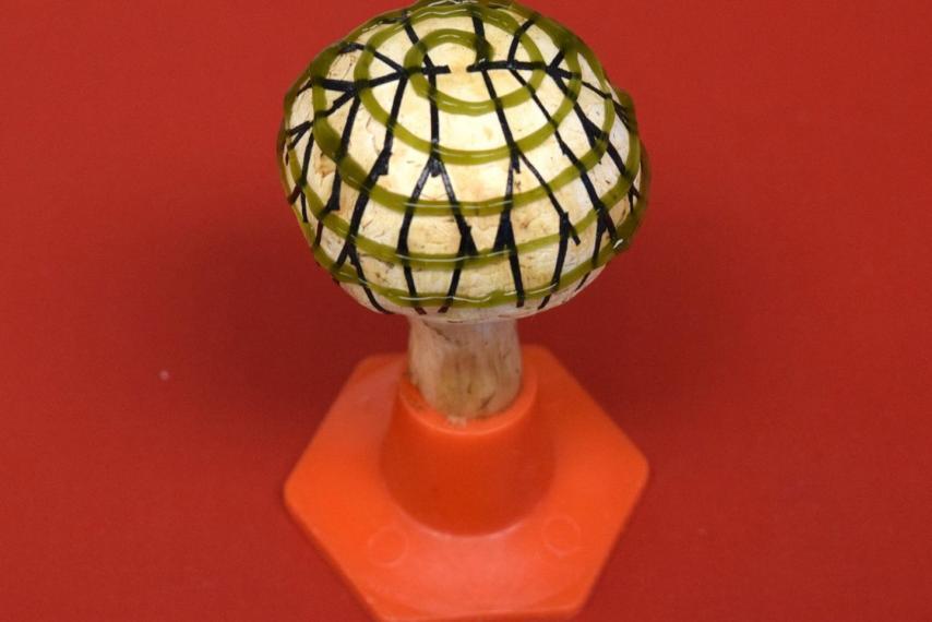 Гриб з графеном і бактеріями виробляє електроенергію / American Chemical Society