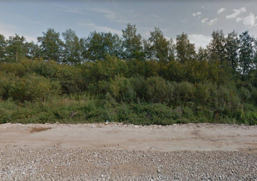 По некоторым признакам можно предположить, что голова принадлежала женщине / фото novosti-n.org