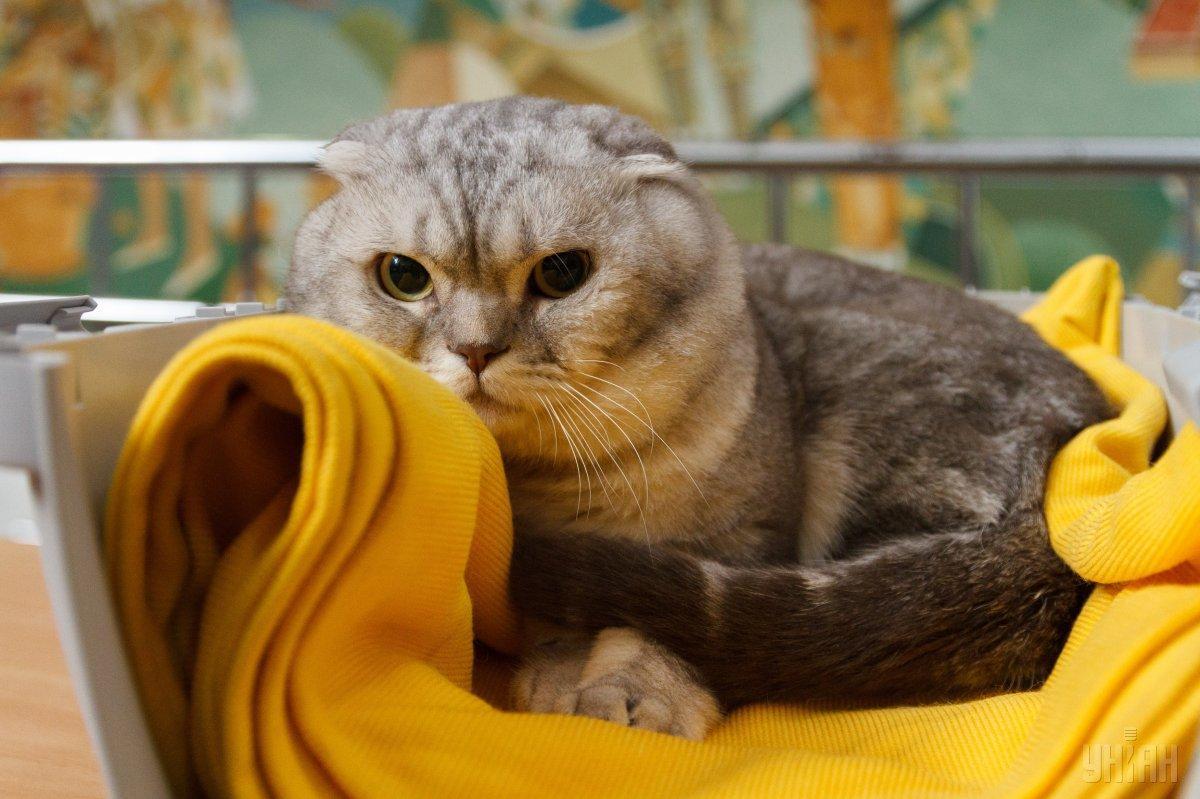 У больной кошки появились трудности с дыханием / Фото УНИАН