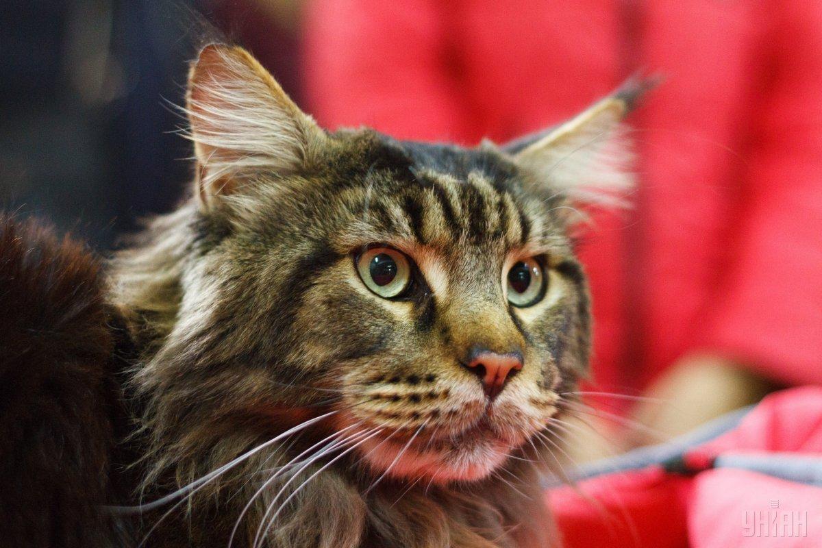 Женщина узнала случайно о поступке кошки \ Фото УНИАН