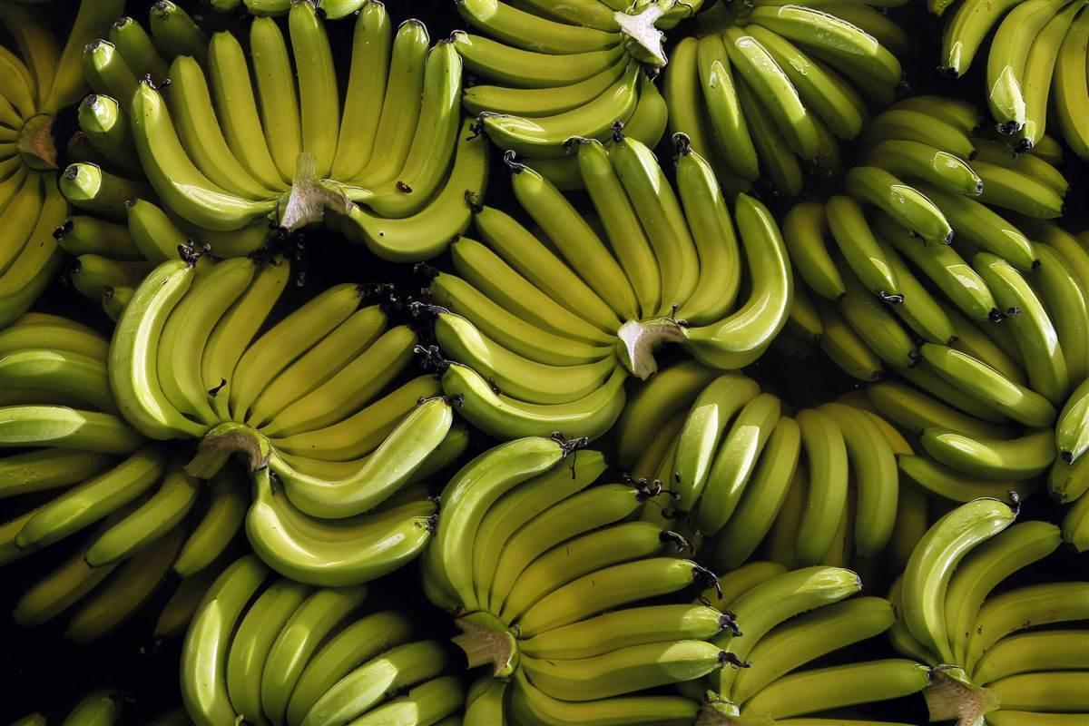 Дешевых бананов на Новый год в Украине можно не ждать /REUTERS
