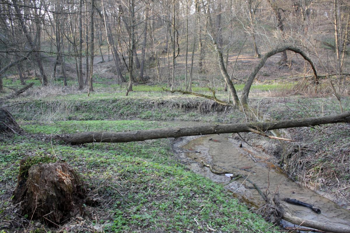 Участок реки Сырец в Сырецкой роще (Дубки) / фото Netmate / wikipedia.org
