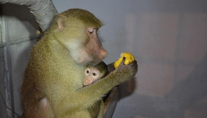 В мариупольский зоопарк привезли семью гамадрилов / фото mariupolrada.gov.ua