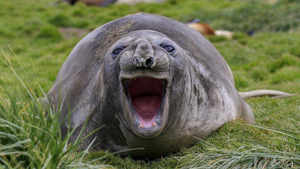 Улыбчивый тюлень / фото AMY KENNEDY