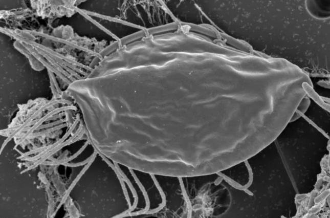 Вчені виявили невідомі мікроорганізми / фото Naked Science
