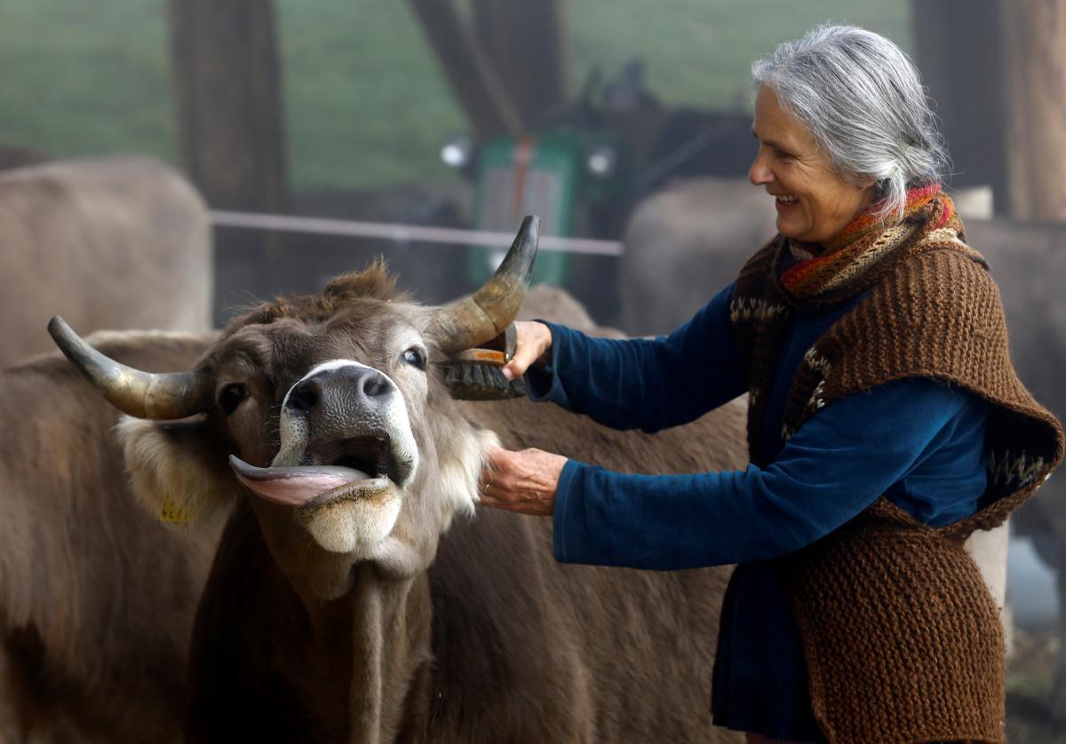 Рогатый скот / Reuters