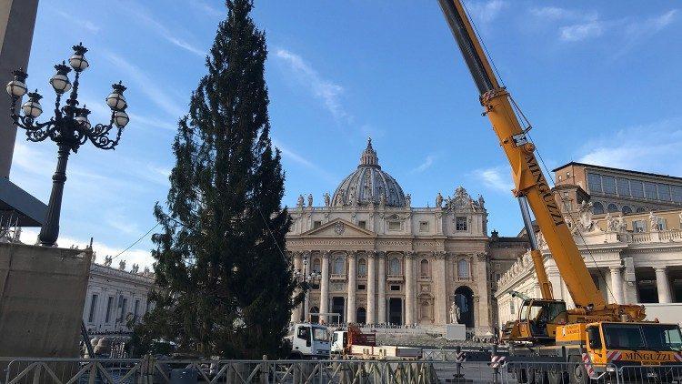 Рождественская елка в Ватикане / vaticannews.va