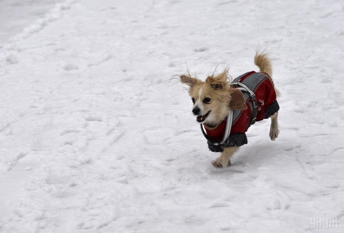 Зимова погода прийде в Україну в середині грудня / УНІАН