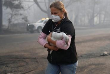 Лісові пожежі в Каліфорнії: як рятують тварин (фото, відео)