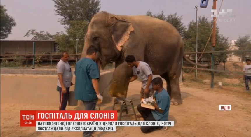 В Індії відкрили перший госпіталь для слонів (відео)