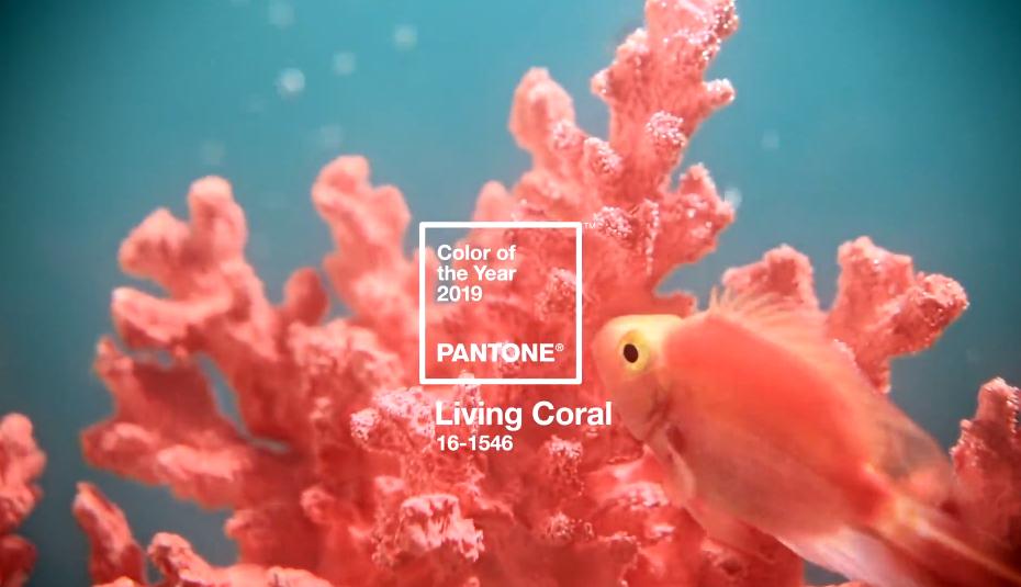 Цветом 2019 года стал коралловый / Pantone