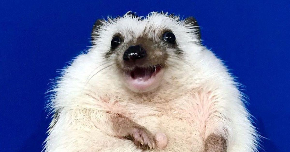 У ежа даже есть собственная страница в соцсети / instagram.com/rick_the_hedgehog