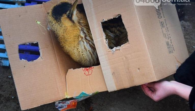 Птиця була у великій картонній коробці з прорізаними «вікнами» \ 04868.com.ua