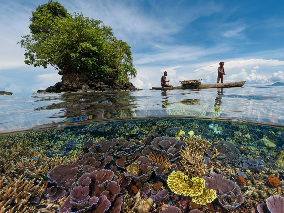 Папуа-Новая Гвинея, иллюстрация / priroda.su