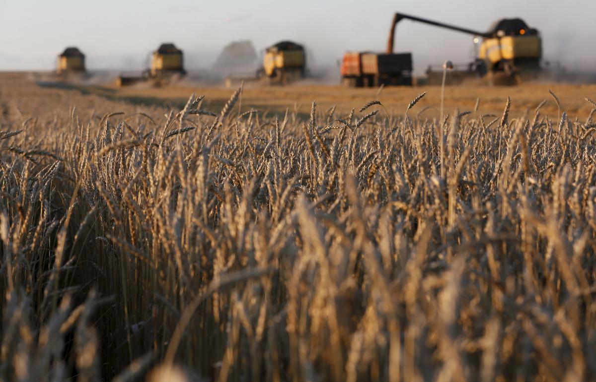 В Минэкономики рассказали о ходе уборки зерновых / REUTERS