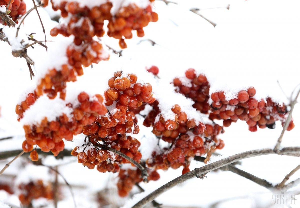 В ближайшие дни во многих областях Украины выпадет снег / фото УНИАН